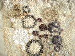 Shirley Johnson - Mycology, detail 2