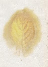 Hydrangea eco print by Rita Summers
